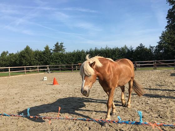 Hart en Paard coaching