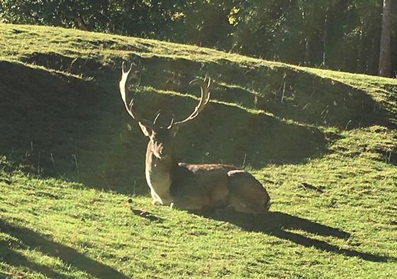 edelhert wildpark