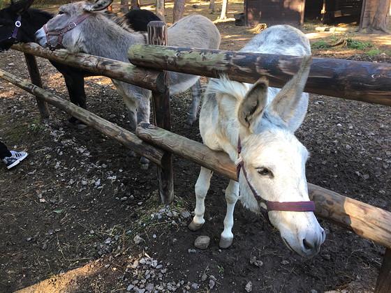 Ploggen 16 Oktober 2016: naar Hochwildpark Rheinland ezel