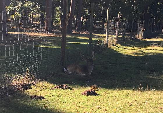 Ploggen 16 Oktober 2016: naar Hochwildpark Rheinland hert