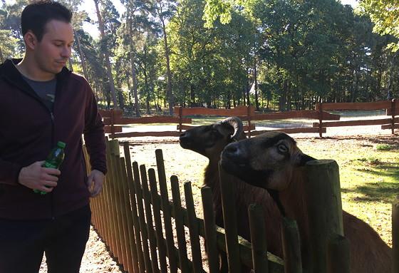 Ploggen 16 Oktober 2016: naar Hochwildpark Rheinland bokken