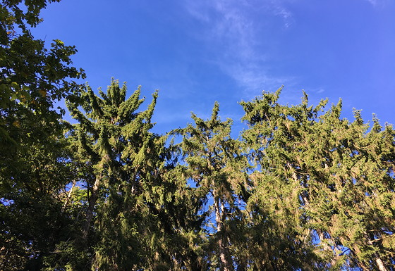 Ploggen 16 Oktober 2016: naar Hochwildpark Rheinland weer